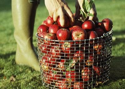 Fruktkurv fra Korbo